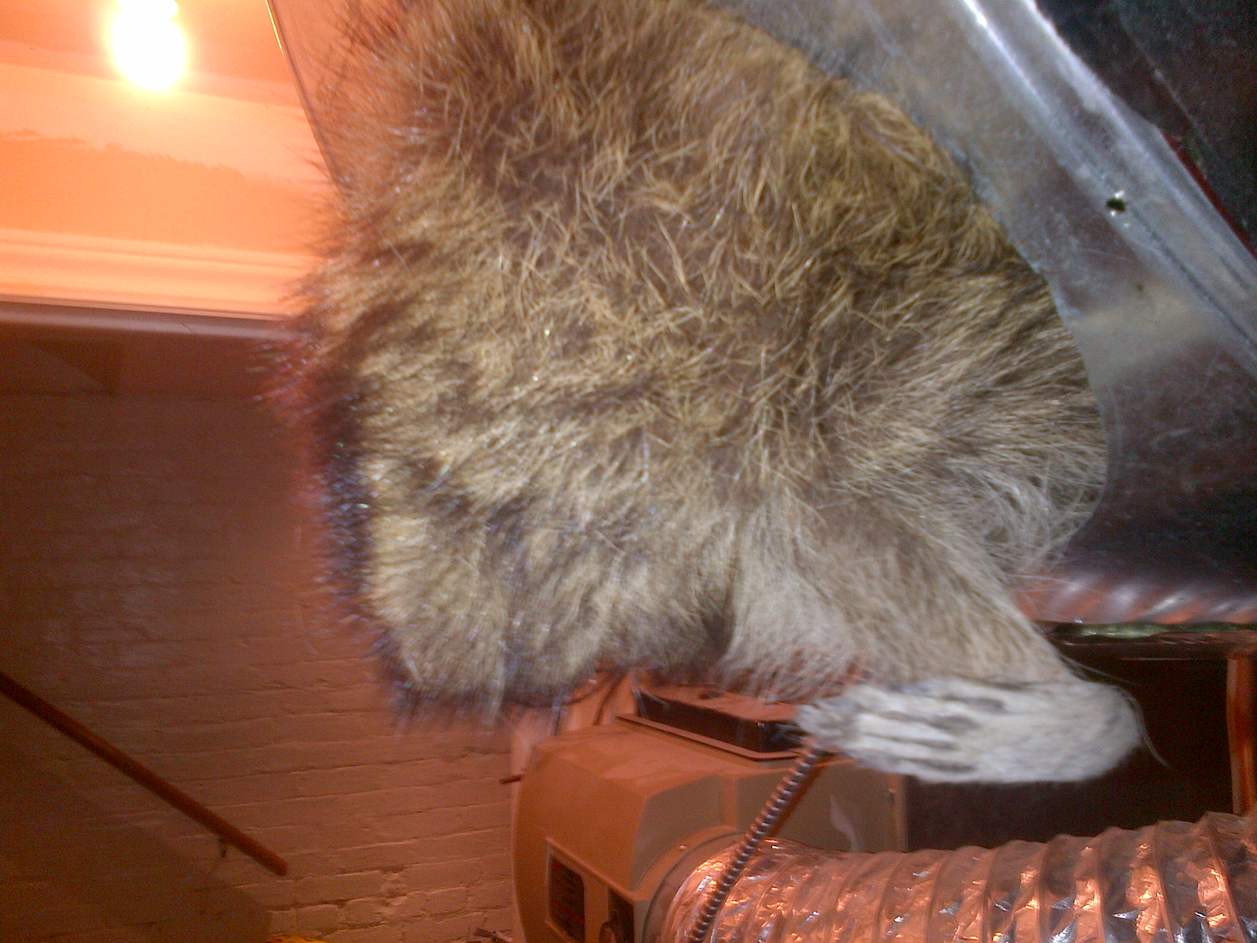 dead racoon in ductwork